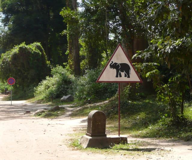 Attention traversée d'Eléphants