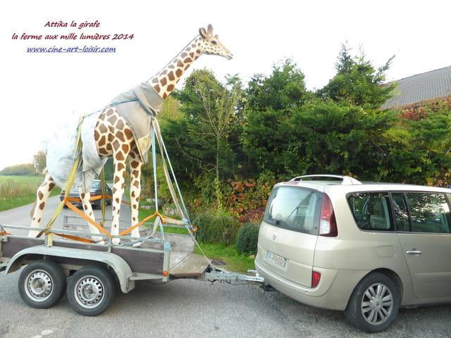 Attika la girafe à la ferme aux mille lumières