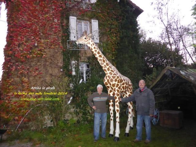 Attika la girafe à la ferme aux mille lumières 2014