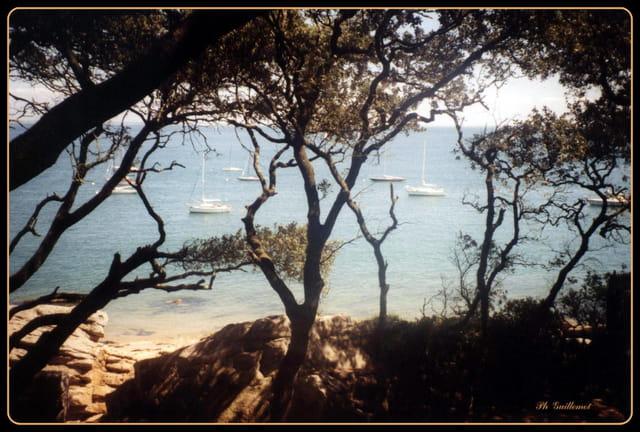 Au bois madame, une belle vue.Noirmoutier