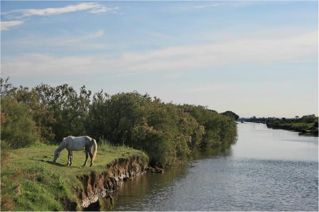 Au bord du canal