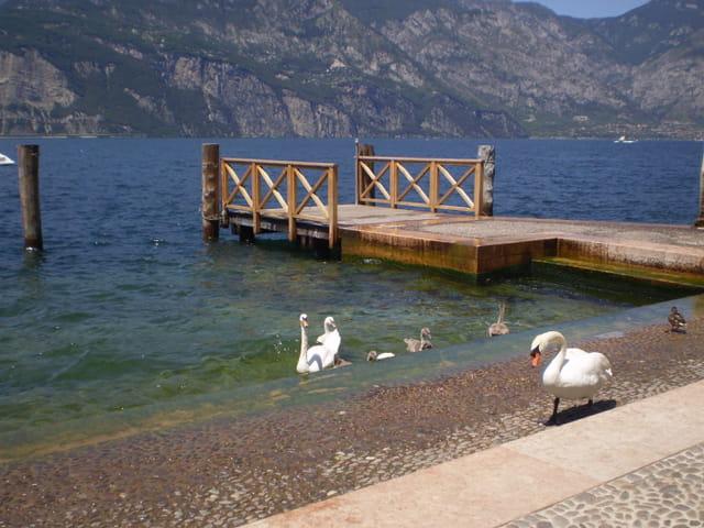 Au bord du lac de Garde à Malcesine