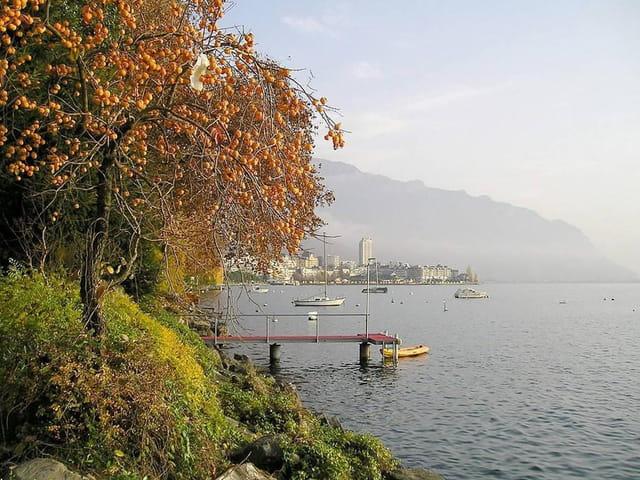 Au bord du lac Léman (3)