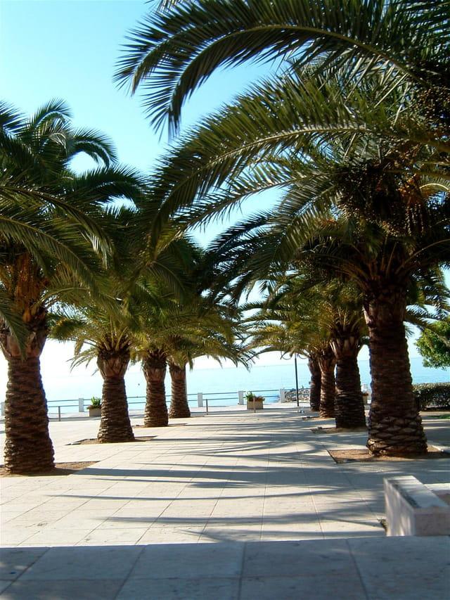 Au bout des palmiers la mer