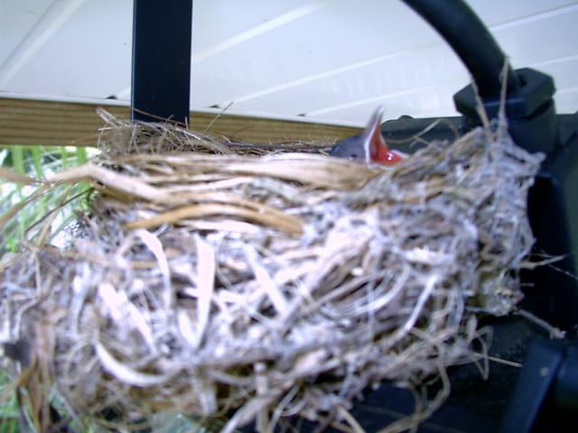 Au chaud dans le nid