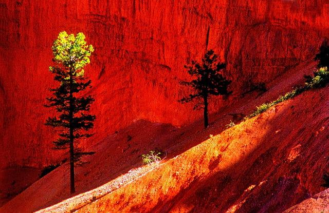 Au coeur de Bryce Canyon