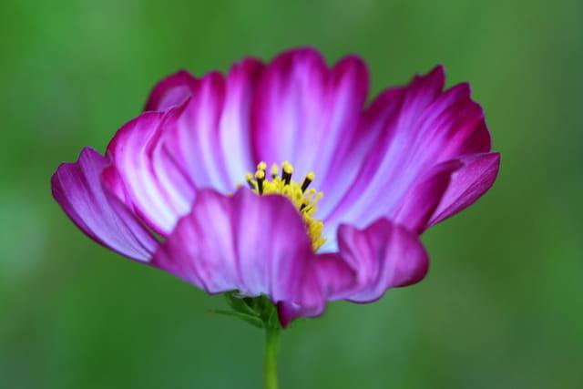 Au creux de la fleur