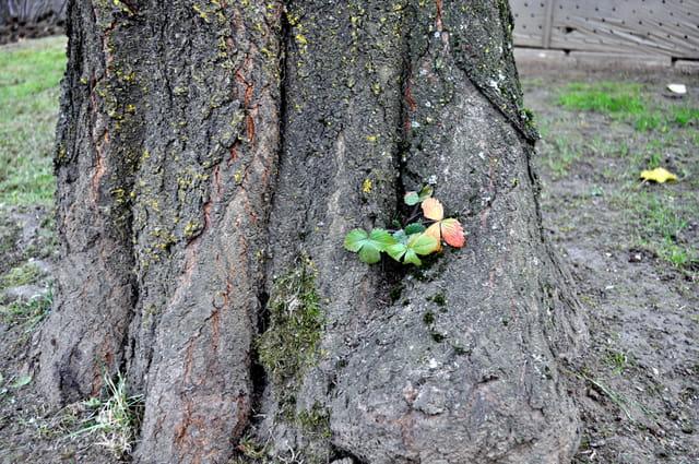 Au creux de mon arbre