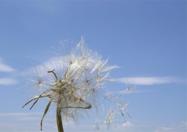 Au gre du vent