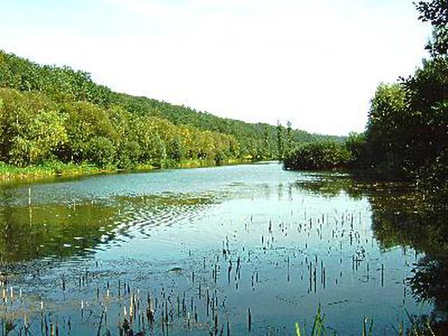 Au milieu coule une riviere