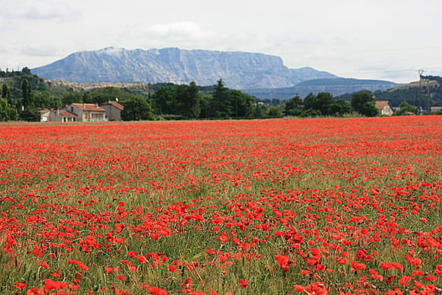 Au pays de Cezanne