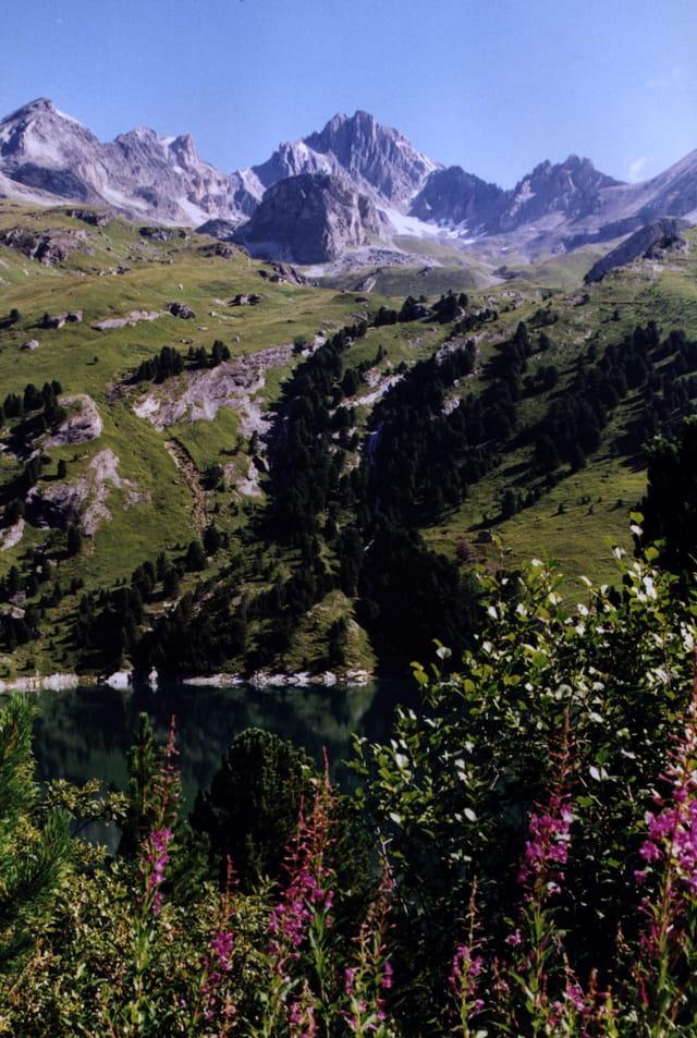 Au pied de la montagne D. Colombini