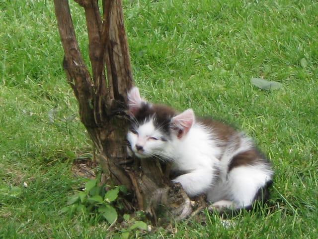 Au pied de mon arbre, je vivais heureux