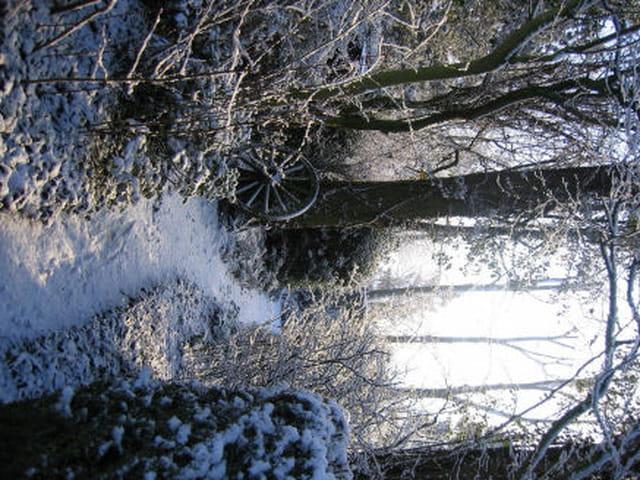 Aube d'hiver