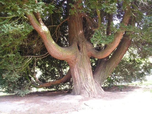 Aupres de mon arbre