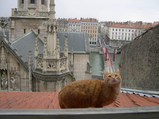 Austin sur les toits