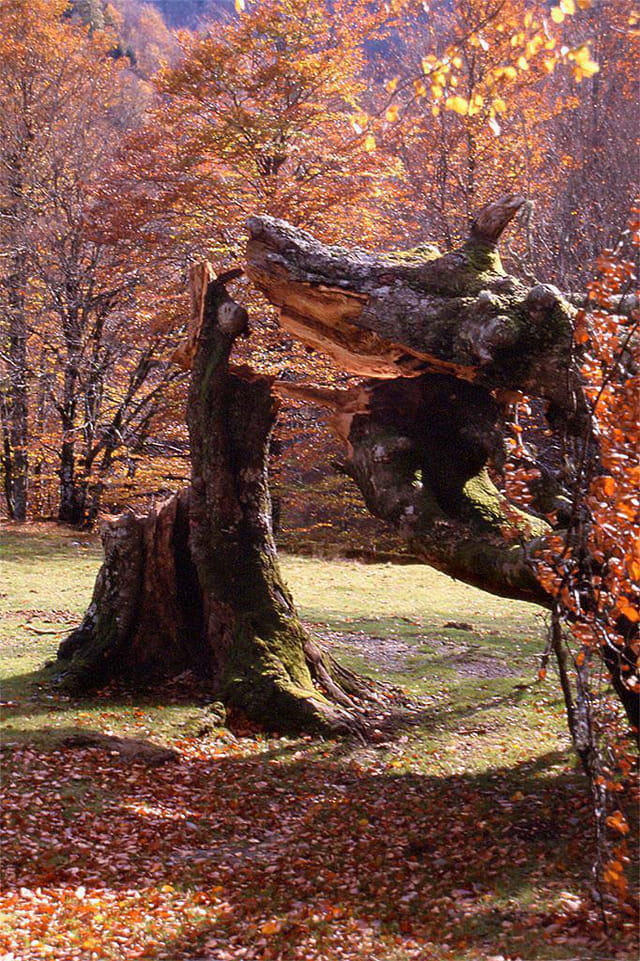 Automne en forêt d'iraty