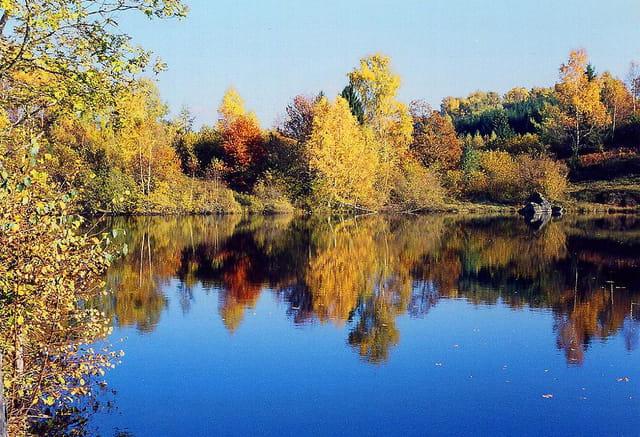Automne sur l'étang