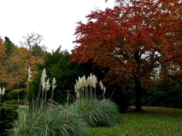 Autour du lac, Forêt de Montgeon