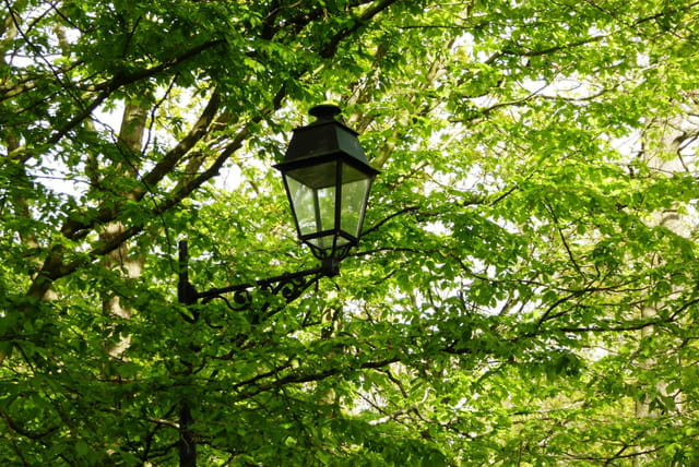 Autre lanterne parmi les feuillages