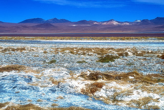 Aux abords de la Laguna Colorada