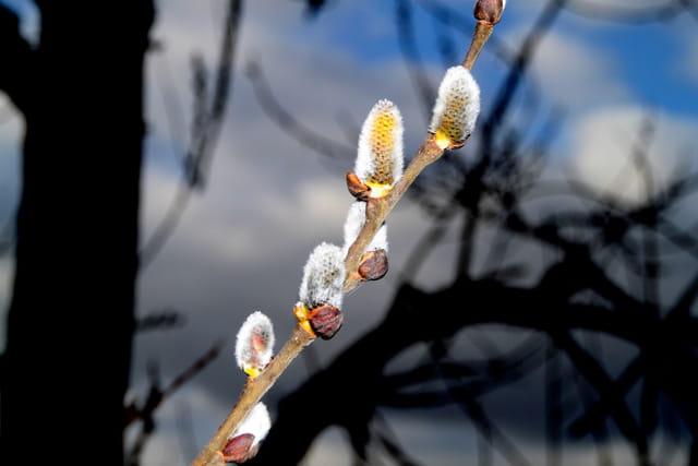 Aux portes du printemps