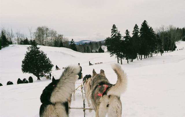 Avec les huskys