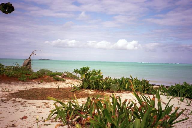 Bahamas, le jardin d'éden