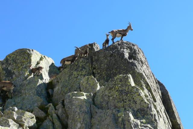 Balade au sommet