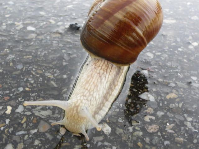 Balade d'escargot