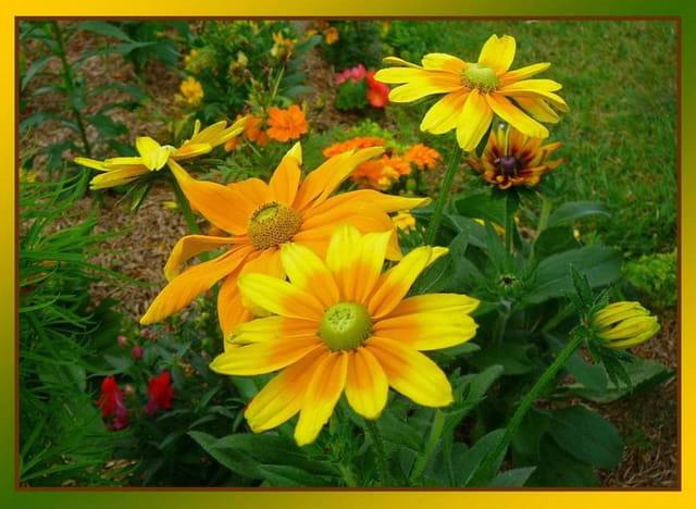 Balade dans le jardin botanique d'Evreux 6