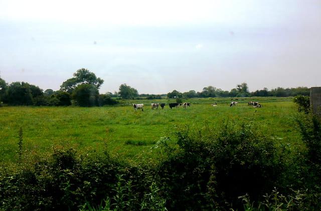 Balade dans le train touristique du Cotentin - Vue sur la campagne normande