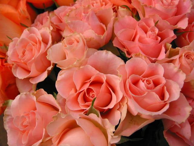 Ballets de roses