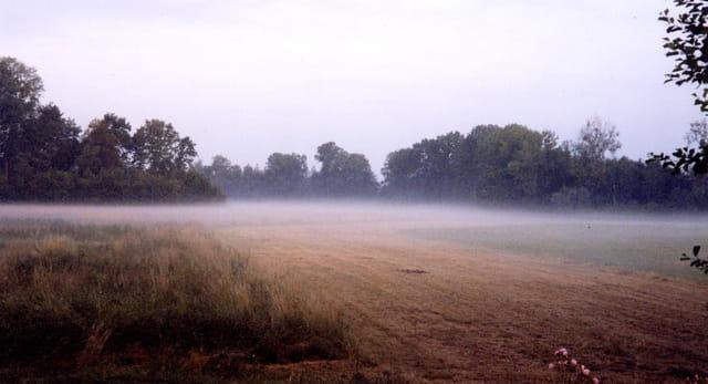 Banc de brume matinal
