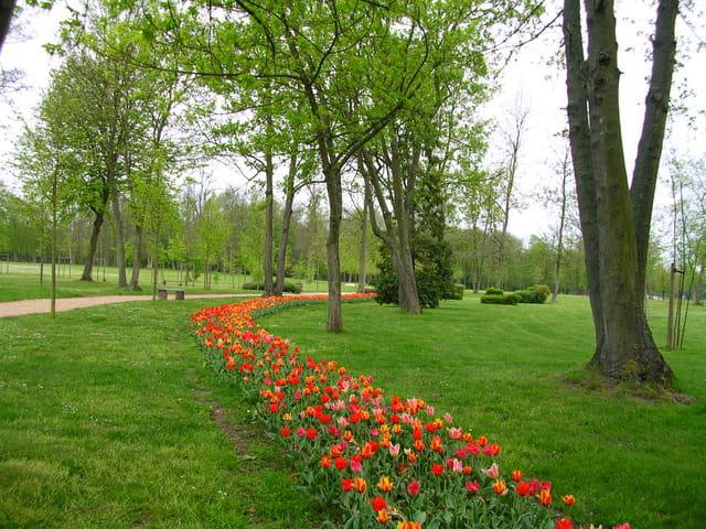Bande de tulipes