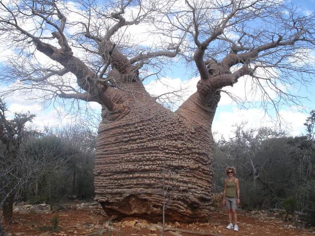Baobab du parc Tsimanampetsotsa