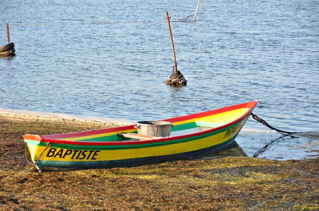 Barque au bord de l'etang
