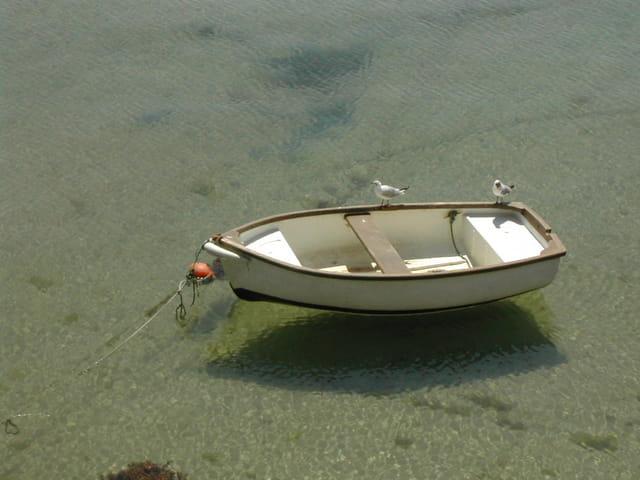 Barque et mouettes