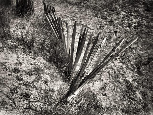 Barrière sur le dune - Cap Cabourg