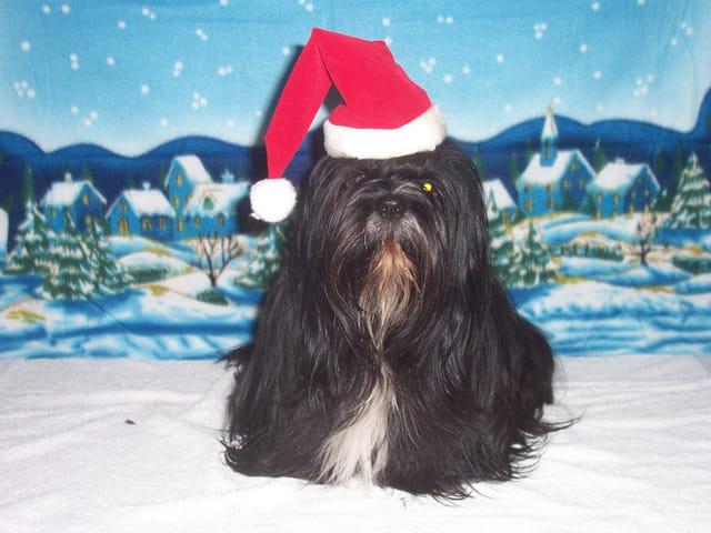 Baya chien de Noël