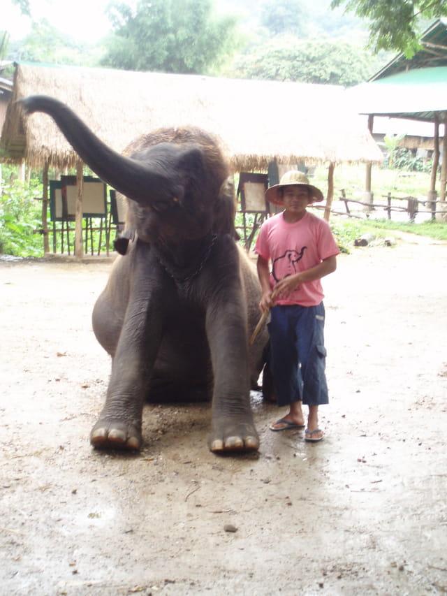 BB éléphant fait la révérence