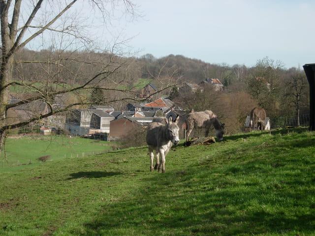 Beau village de wallonie