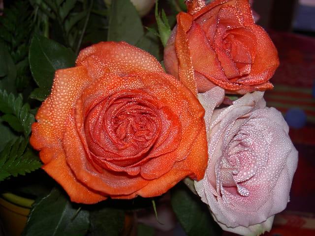 Beauté de fleurs et la rosée