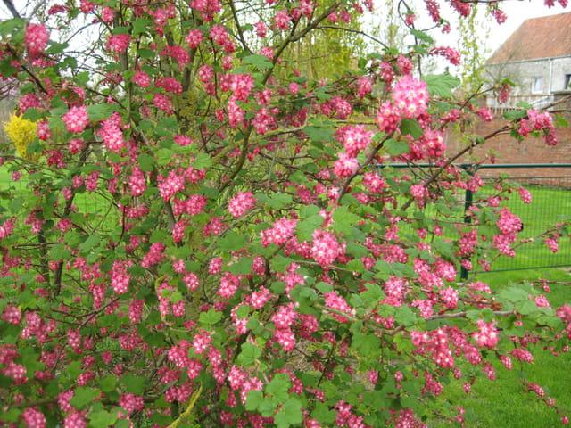 Beauté du printemps