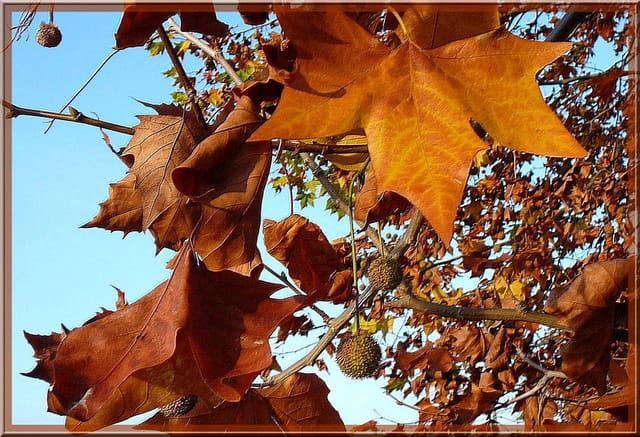 Beauté éphémère de l'automne