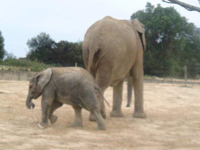 Bébé avec maman
