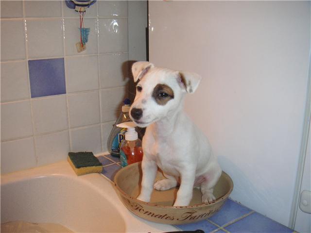 Bebe chien par jean philippe rathier sur l 39 internaute - Image bebe chien ...