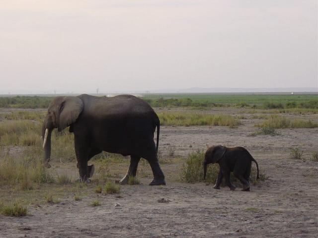 Bébé éléphant