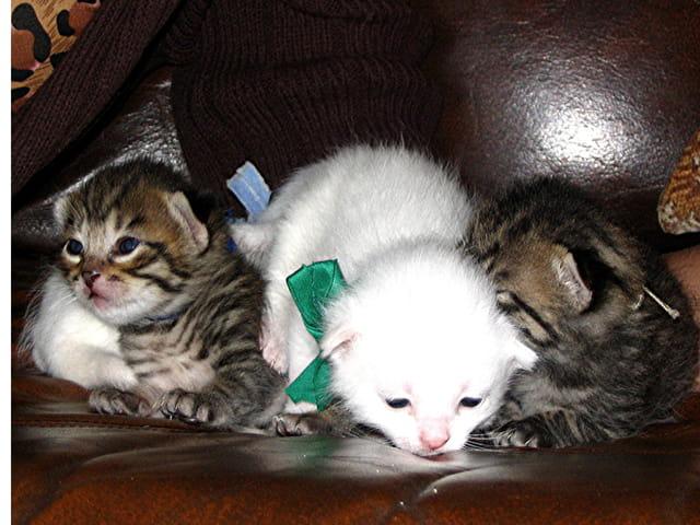 Bébés chatons