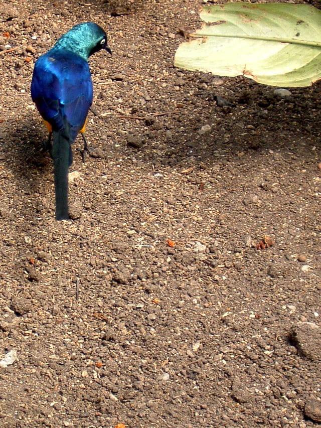 Bel oiseau en liberté